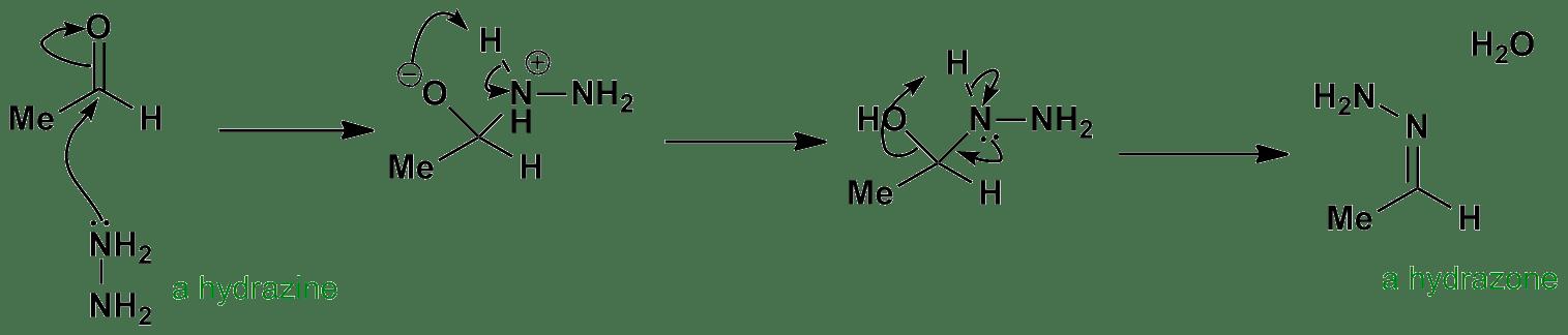 Hydrazone Formation Mechanism